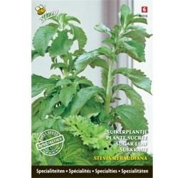 Buzzy Specialties Stevia Rebaudiana zaden