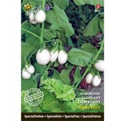 Buzzy Specialties Aubergine White Eggs zaden